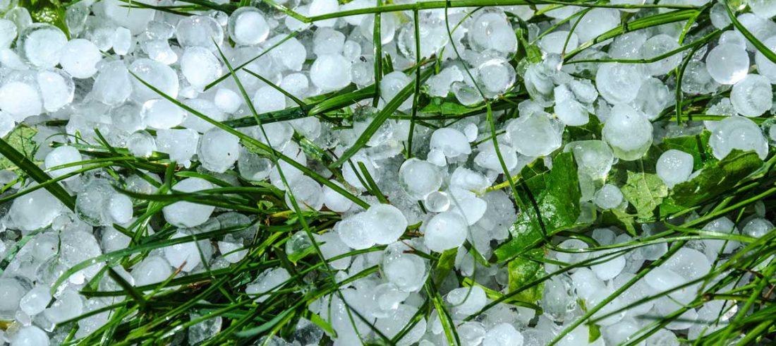 Hail In Grass