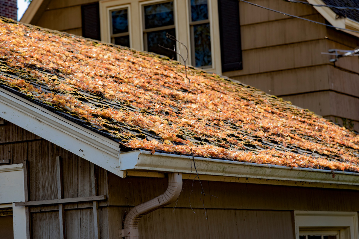 Autumn Leaves On Shingled Roof With Rain Gutters Nlyp63l